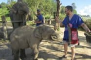 Blue Daily Elephant Care
