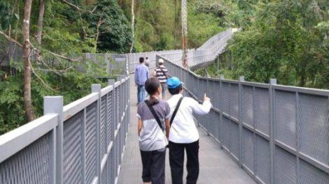 Canopy Walkway Chiang Mai