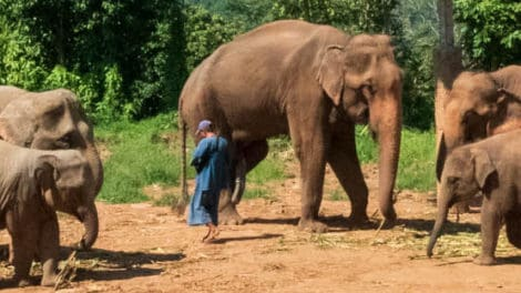 Happy Elephant Care