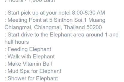 One Day Elephant Care