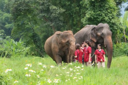 Ran-Tong Save & Rescue Elephant Centre