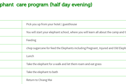 Ran-tong Elephant care program (half day evening)