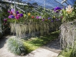 bai-orchid-and-butterfly-farm-at-chiang-mai-thailand-71069201