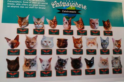 catmosphere chiang mai 20