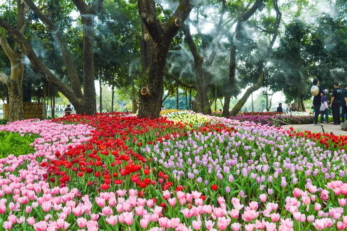 Chiang Mai Flower Festival 09