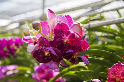 bai orchid and butterfly farm 2